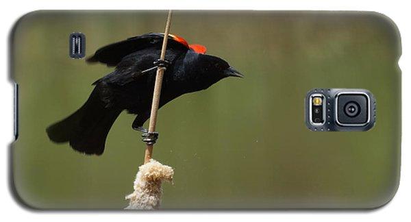 Red Winged Blackbird 3 Galaxy S5 Case by Ernie Echols