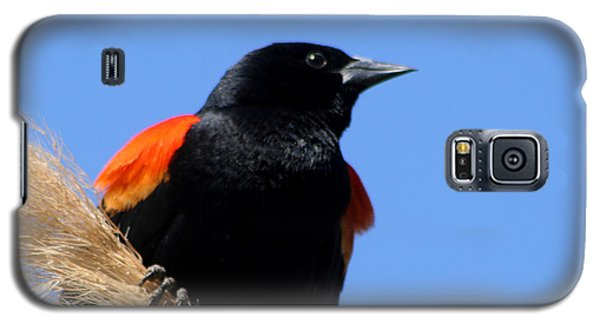Galaxy S5 Case featuring the photograph Red-winged Blackbird by Bob and Jan Shriner