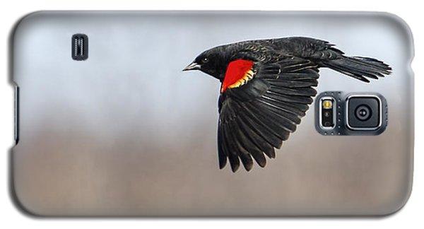 Red-winged Blackbird In Flight Galaxy S5 Case