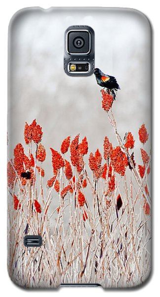 Red Winged Blackbird On Sumac Galaxy S5 Case by Steven Ralser