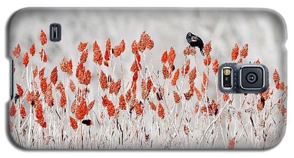 Red-winged Blackbird Galaxy S5 Case
