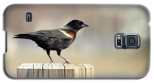 Red Winged Blackbird Galaxy S5 Case