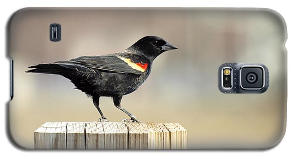 Red Winged Blackbird Galaxy S5 Case