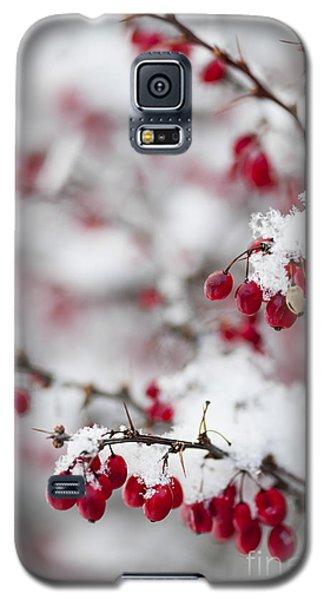 Red Winter Berries Under Snow Galaxy S5 Case