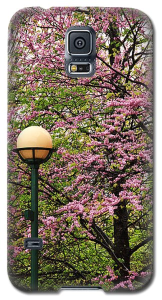 Redbud And Lamp Galaxy S5 Case