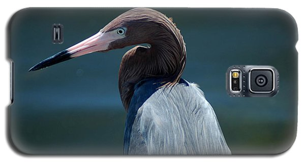 Reddish Egret 3 Galaxy S5 Case