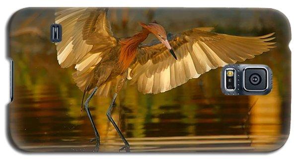 Reddish Egret In Golden Sunlight Galaxy S5 Case
