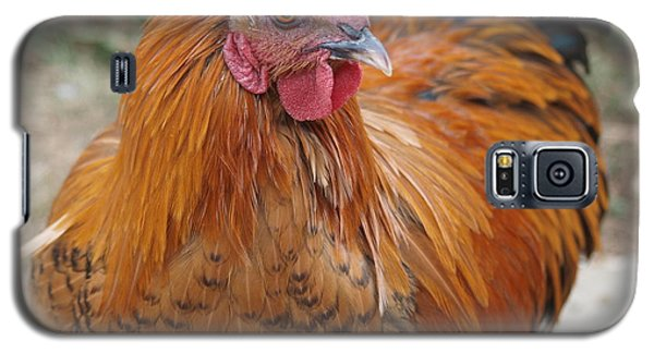 Galaxy S5 Case featuring the photograph Reddy Rooster by Jenessa Rahn