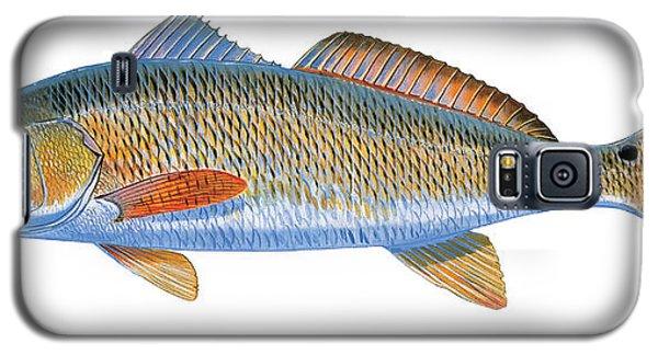 Drum Galaxy S5 Case - Redfish by Carey Chen