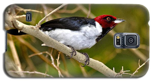 Galaxy S5 Case featuring the photograph Redhead by Adam Olsen