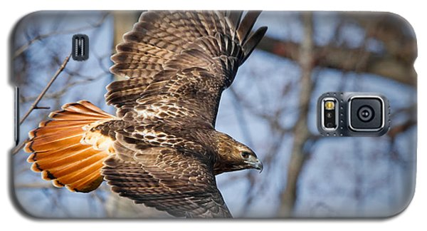 Redtail Hawk Galaxy S5 Case