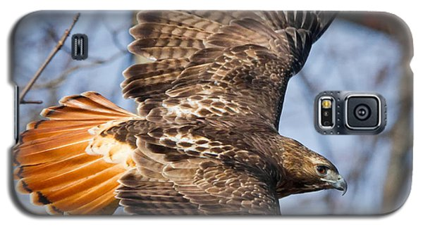 Redtail Hawk Square Galaxy S5 Case