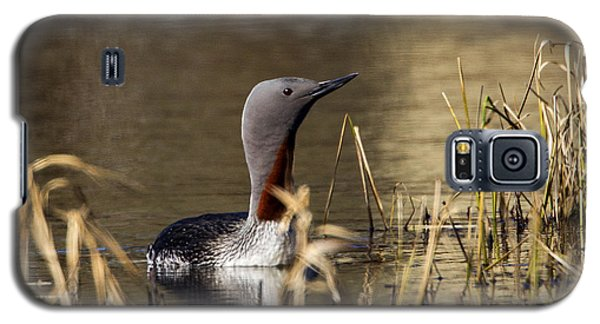 Redthroated Loon Galaxy S5 Case