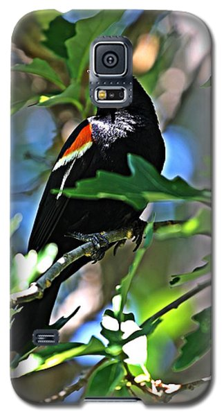 Redwing Blackbird On Alert Galaxy S5 Case