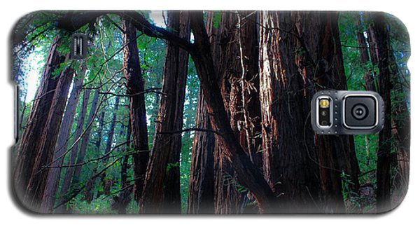 Redwood Forest Galaxy S5 Case