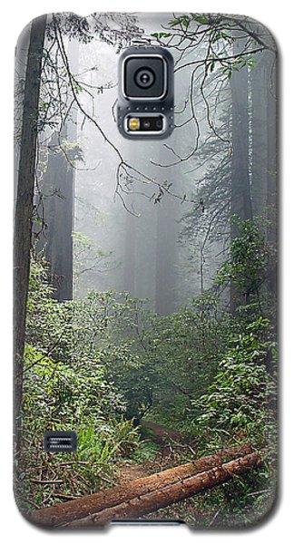 Redwood Mist Galaxy S5 Case