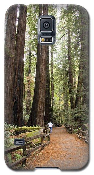 Redwood Trees Galaxy S5 Case