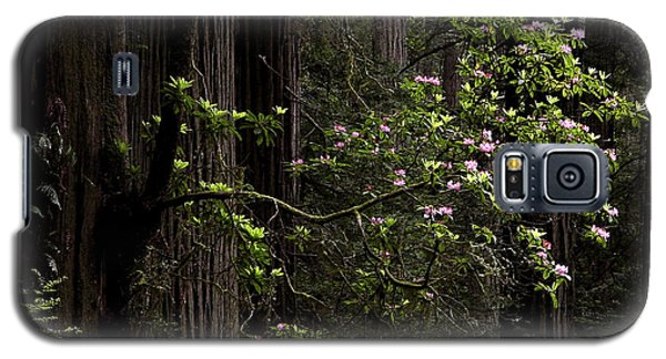 Galaxy S5 Case featuring the photograph Redwoods And Rhodys by Betty Depee