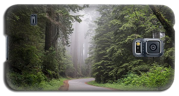 Redwoods In Northern California Galaxy S5 Case