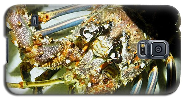 Galaxy S5 Case featuring the photograph Reef Lobster Close Up Spotlight by Amy McDaniel