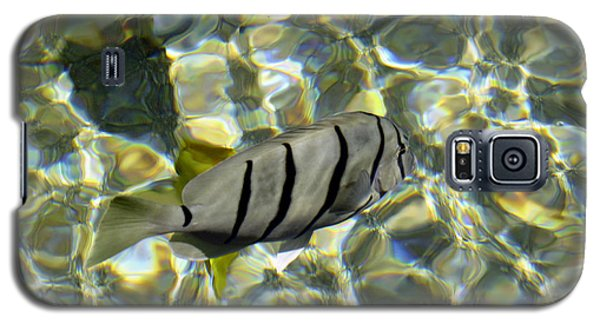 Reflection Fish Galaxy S5 Case