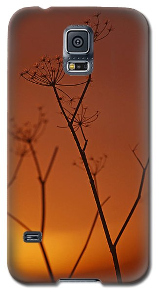 Galaxy S5 Case featuring the photograph Regal Old Queen by Jani Freimann
