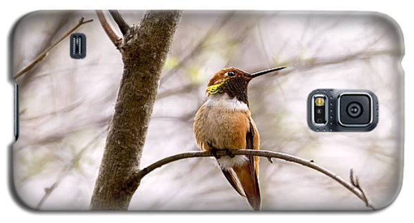 Regal Rufous Hummingbird Sitting Galaxy S5 Case by Peggy Collins