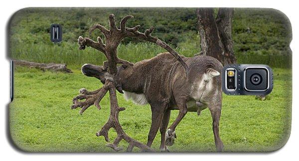 Reindeer With A Big Rack Galaxy S5 Case
