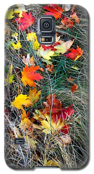 Galaxy S5 Case featuring the photograph Release by Kathy Bassett