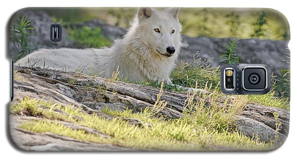 Galaxy S5 Case featuring the photograph Resting Arctic Wolf by Wolves Only