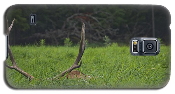 Resting Elk Galaxy S5 Case