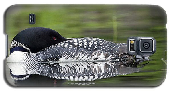 Resting Loon Galaxy S5 Case