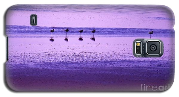 Avocets Resting In The Sunset Galaxy S5 Case by Michele Penner