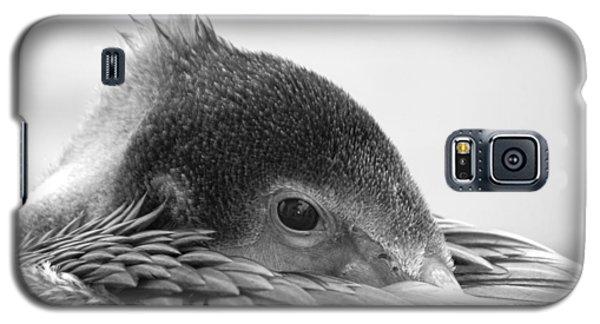 Resting Pelican Galaxy S5 Case