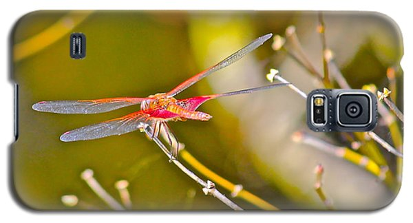 Galaxy S5 Case featuring the photograph Resting Red Dragonfly by Cyril Maza