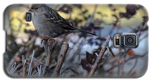 Galaxy S5 Case featuring the photograph Resting Sparrow by Marjorie Imbeau