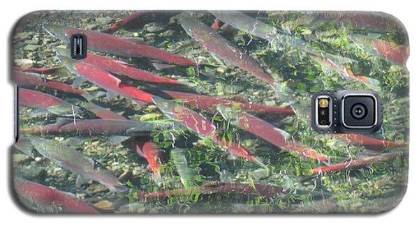 Returning Salmon Galaxy S5 Case