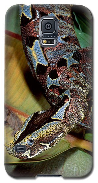 Rhino Viper Galaxy S5 Case