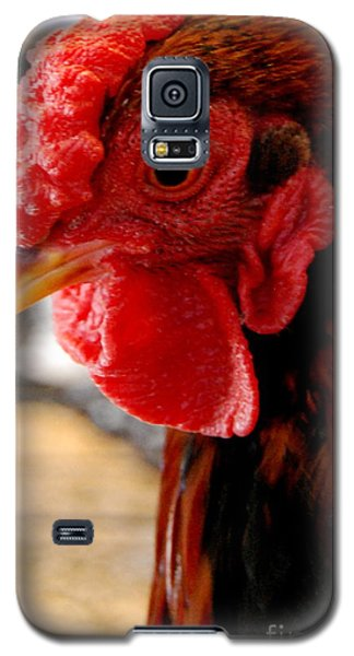 Rhode Island Red Galaxy S5 Case