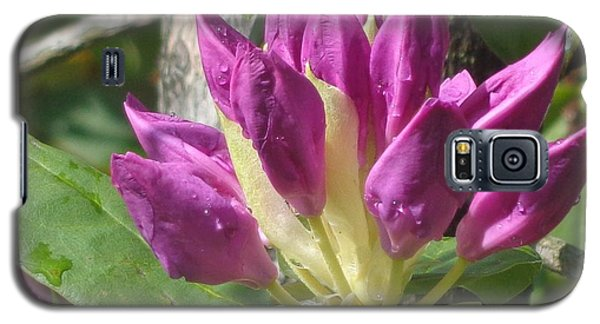 Rhodo Buds N Raindrops Galaxy S5 Case