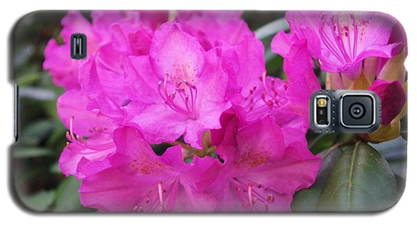 Galaxy S5 Case featuring the photograph Rhododendron by David Rizzo
