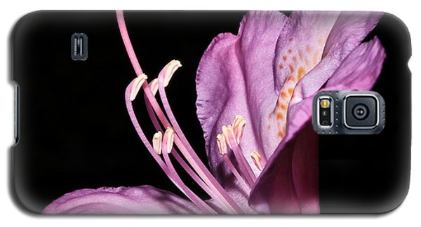Rhododendron Maximum Galaxy S5 Case by Tammy Schneider