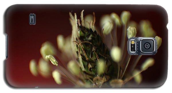 Ribwort Plantain  Galaxy S5 Case by Eden Baed