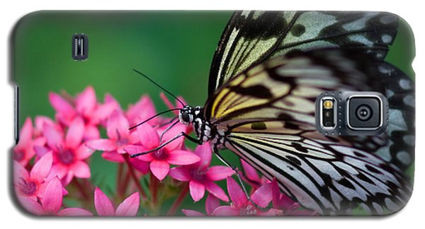 Rice Paper Butterfly Galaxy S5 Case by Joann Vitali