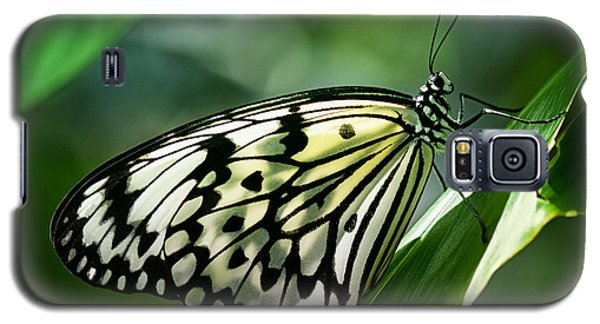 Galaxy S5 Case featuring the photograph Rice Paper Butterfly by Zoe Ferrie