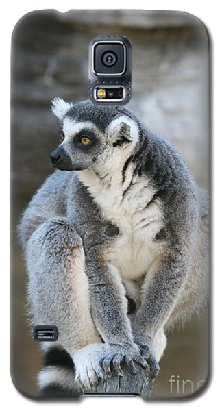 Galaxy S5 Case featuring the photograph Ring-tailed Lemur #3 by Judy Whitton
