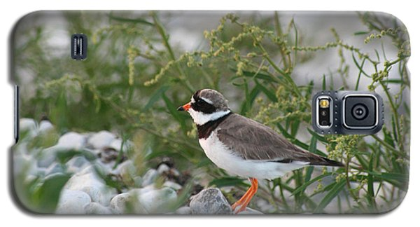 Ringed Plover On Rocky Shore Galaxy S5 Case