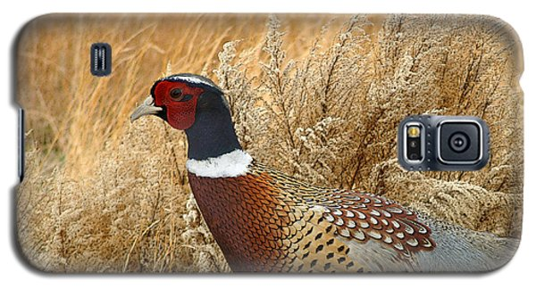Ringneck Pheasant  Galaxy S5 Case