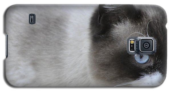 Galaxy S5 Case featuring the photograph Ringtail by Sarah McKoy