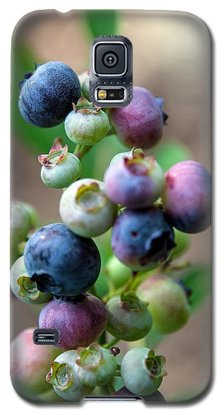 Ripening Blueberries Galaxy S5 Case